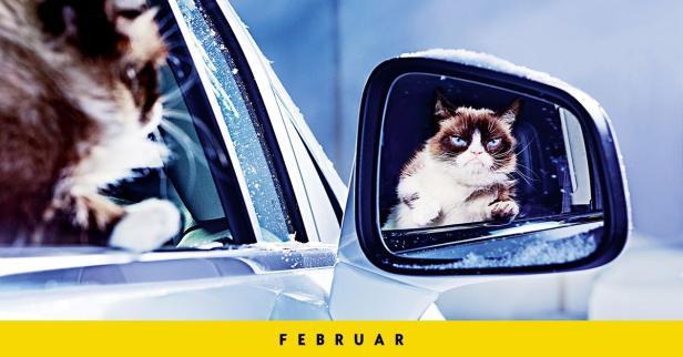 opel beleidigt user auf twitter: grumpy cat ist schuld   futurezone.at