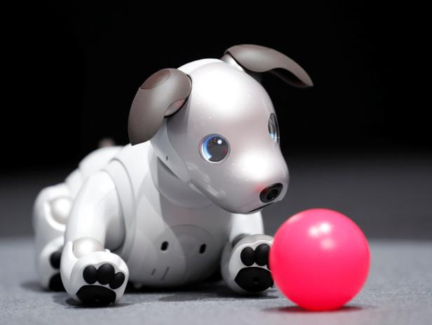 """Sony Corp's entertainment robot """"aibo"""" is pictured at its demonstration in Tokyo"""