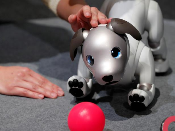 """A staff memeber touches Sony Corp's entertainment robot """"aibo"""" at its demonstration in Tokyo"""