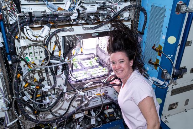 Un astronauta americano con una piccola serra a bordo della Stazione Spaziale Internazionale