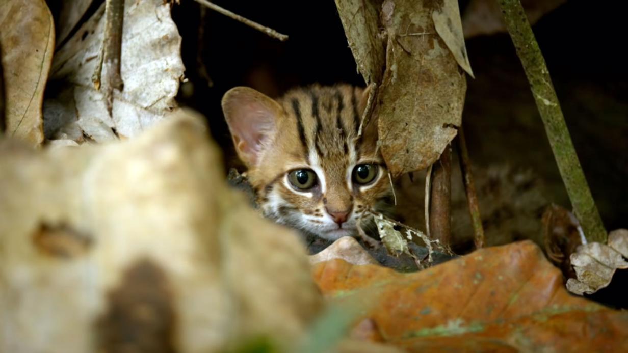 Welt kleinste katzen der Kleine Katzen