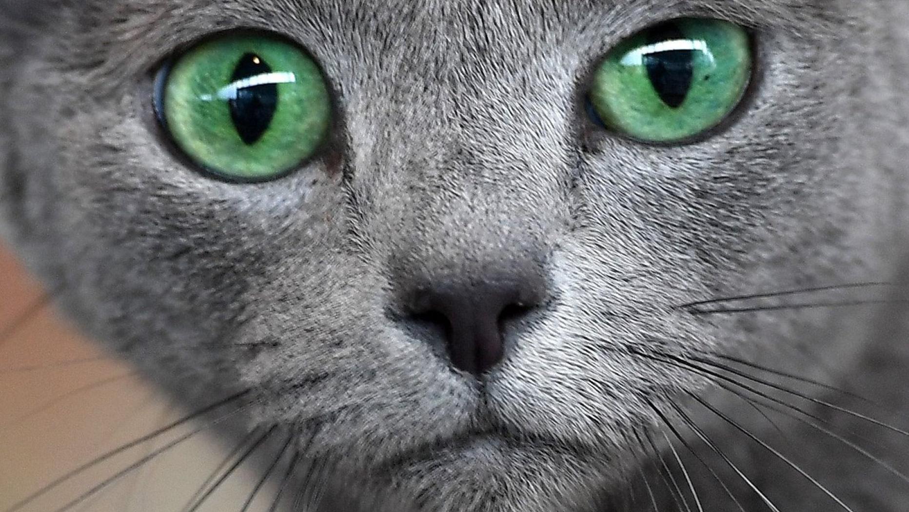 Suche Nach Katzen