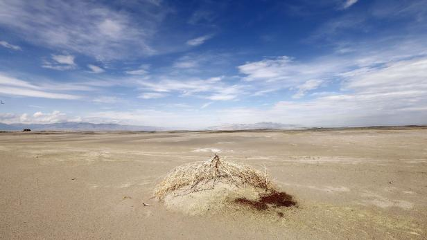 A first tumble weed sits on a mud flat where water used to be next to the Great Salt Lake Marina west of Salt Lake City