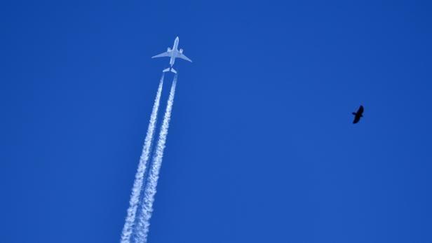 Vogel und Flugzeug