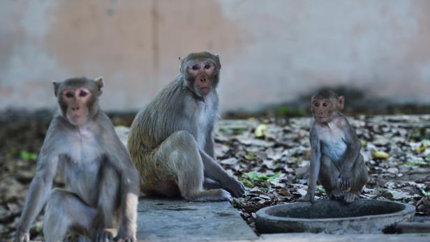 INDIA-HEALTH-VIRUS-ANIMAL