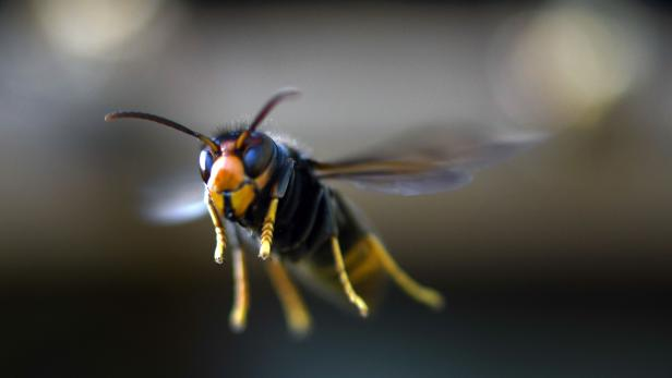 FRANCE-NATURE-INSECT-FEATURE