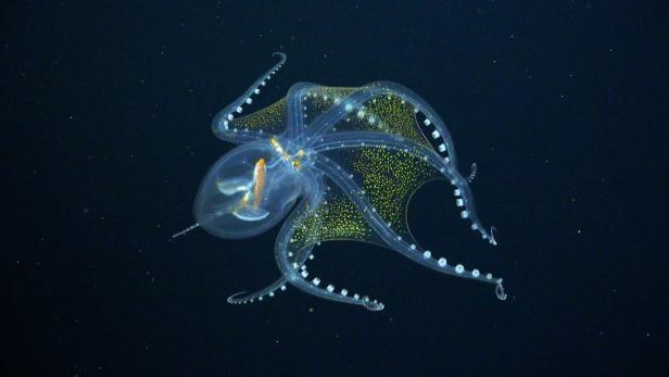 glas-oktopus.jpg