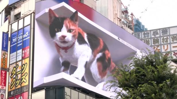 Animierte Katze auf riesigem Display in Tokio