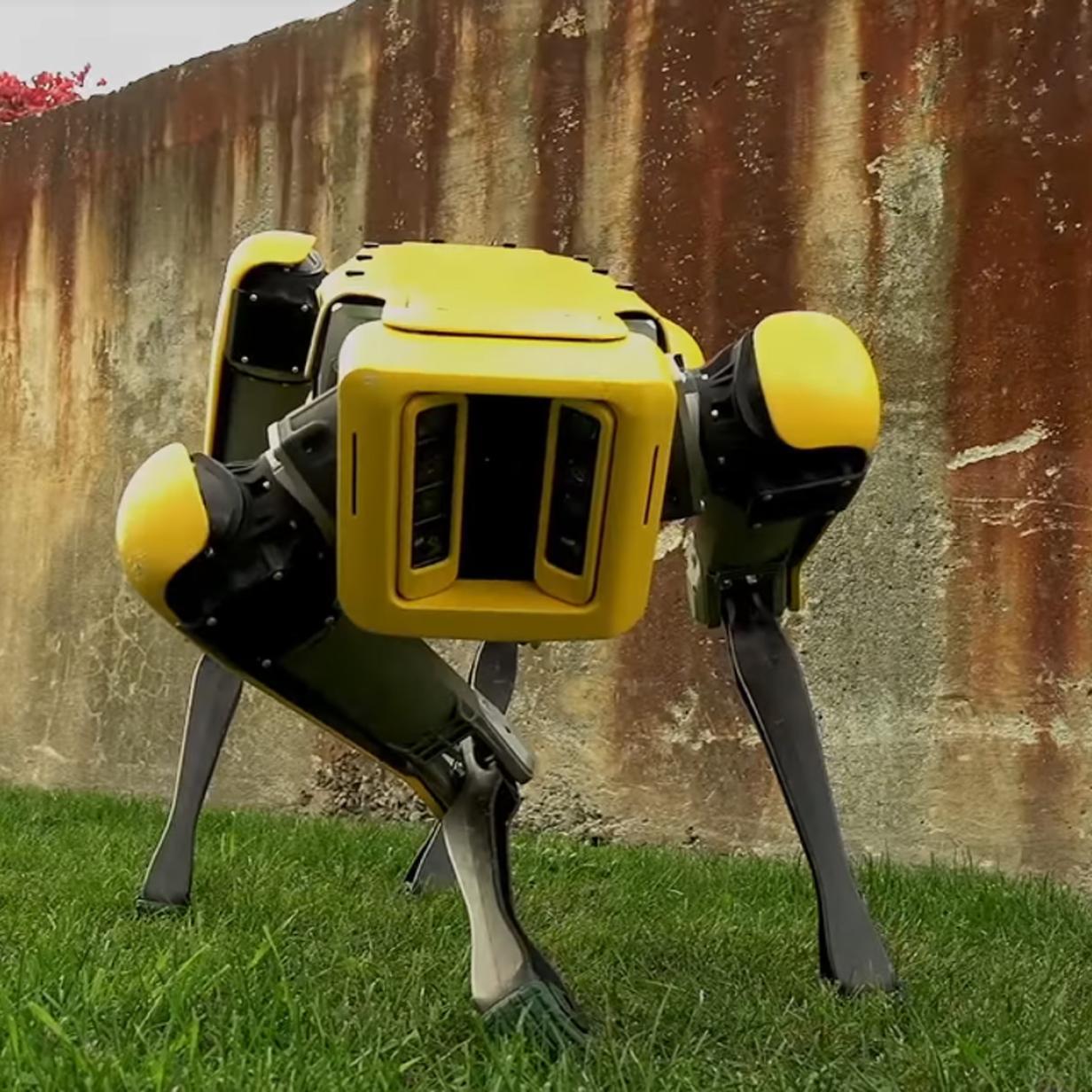 Hundeähnliche Roboter Spot Mini ziehen gemeinsam schweren Lkw