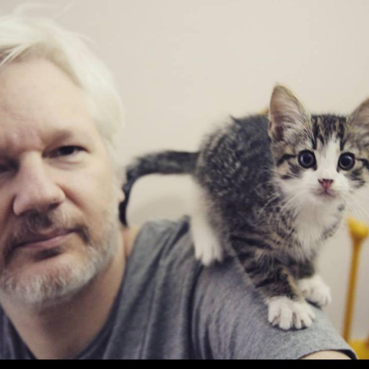 Embassy Cat: Katze von Asssange ist in Sicherheit