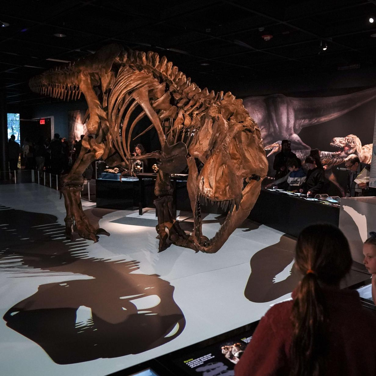 Skelett-Teile von Baby-T-Rex auf Ebay angeboten