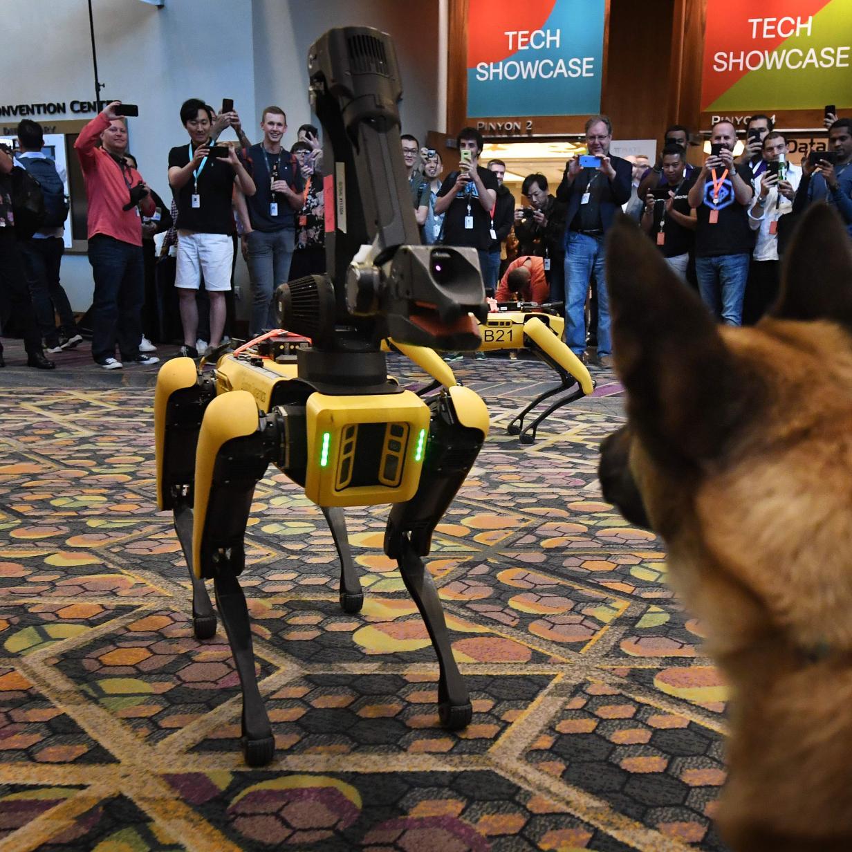 Video: Roboterhund Spot kollabiert dramatisch bei Live-Auftritt