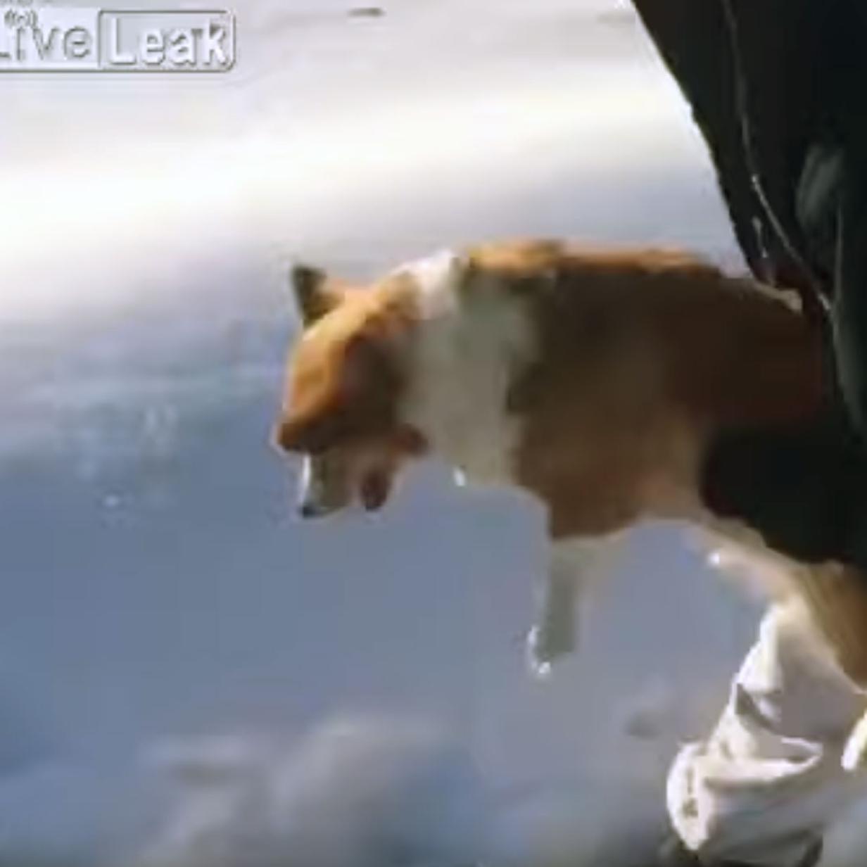 Ins Netz gegangen: Hund wird aus Flugzeug geworfen