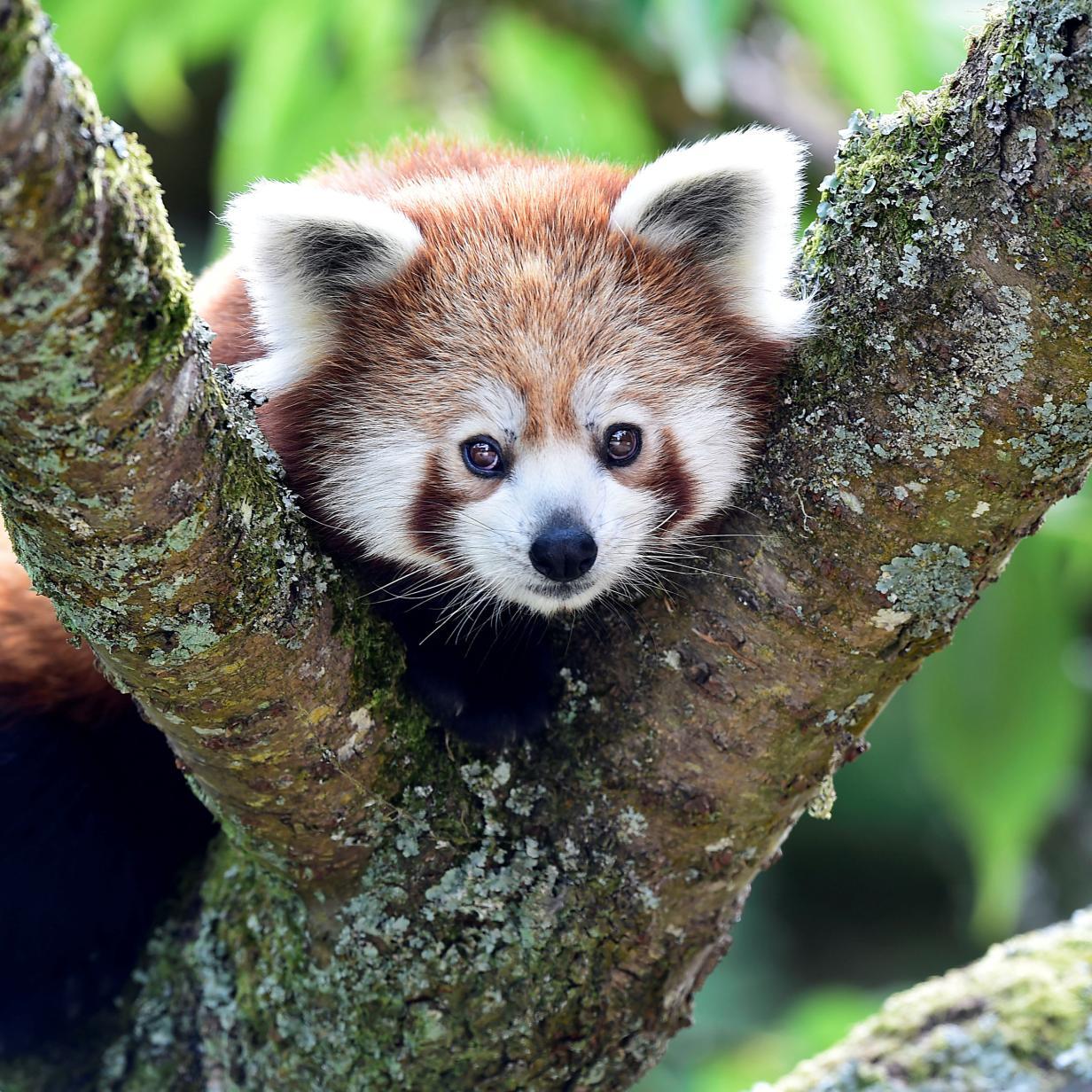 Firefox 70 mit besserem Tracking-Schutz und Passwortmanager