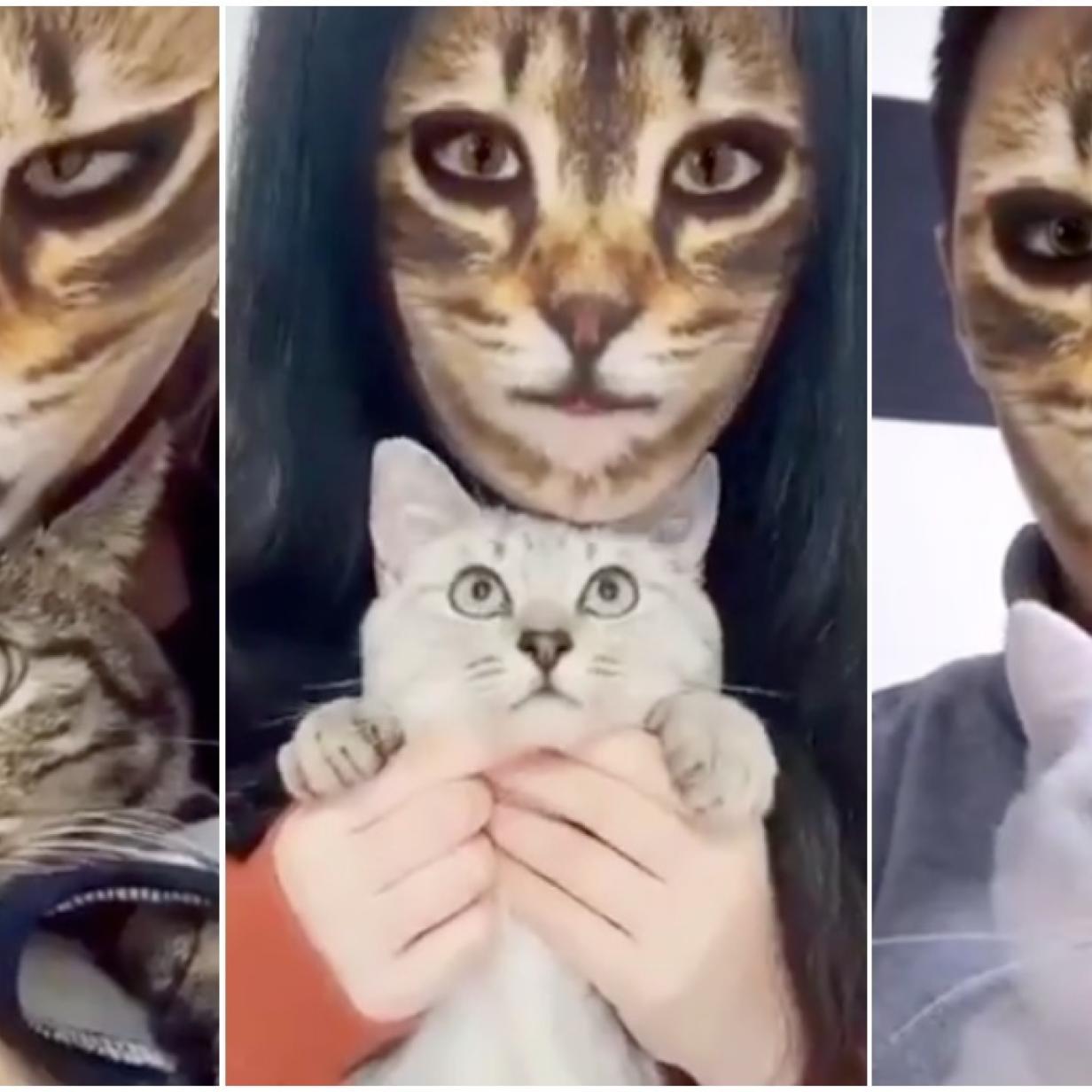 Nutzer ärgern ihre Katzen mit einem Katzen-Filter fürs Handy