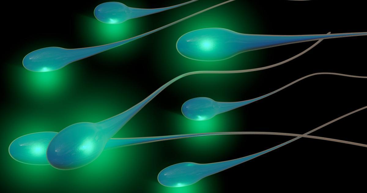 Auf der ISS wird Sperma in der Schwerelosigkeit untersucht