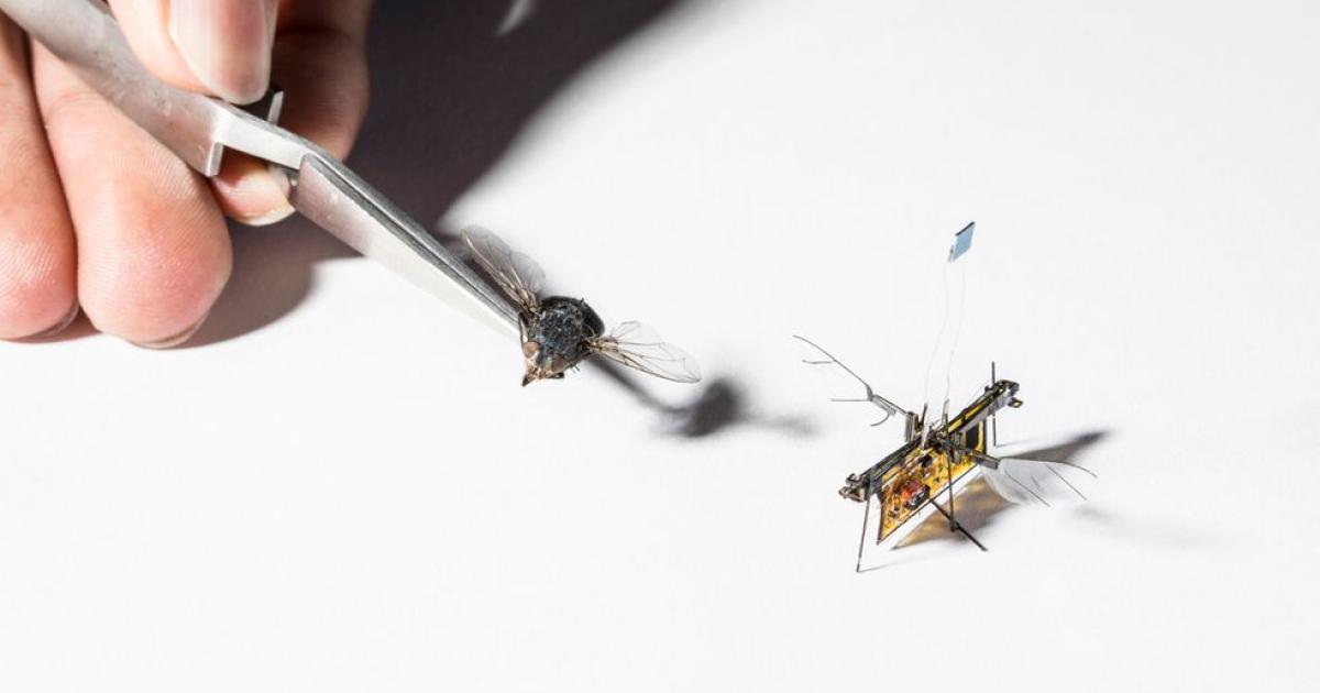Laserbetriebene Roboterfliege auf Video gebannt