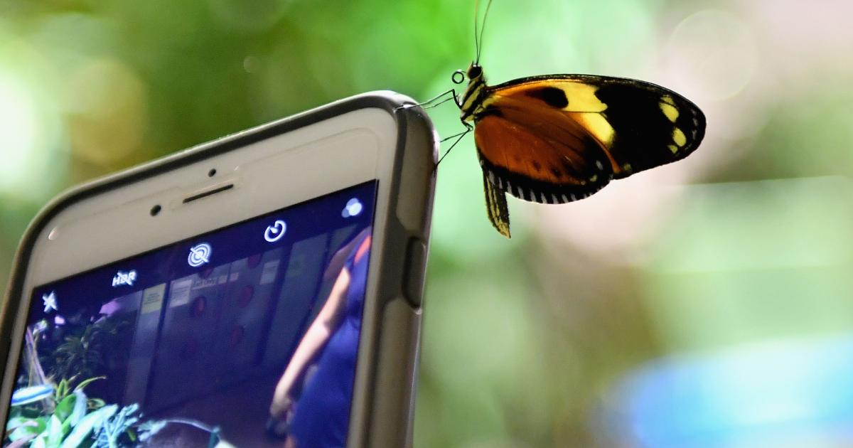 These smartphones are the highest radiation levels – neuck