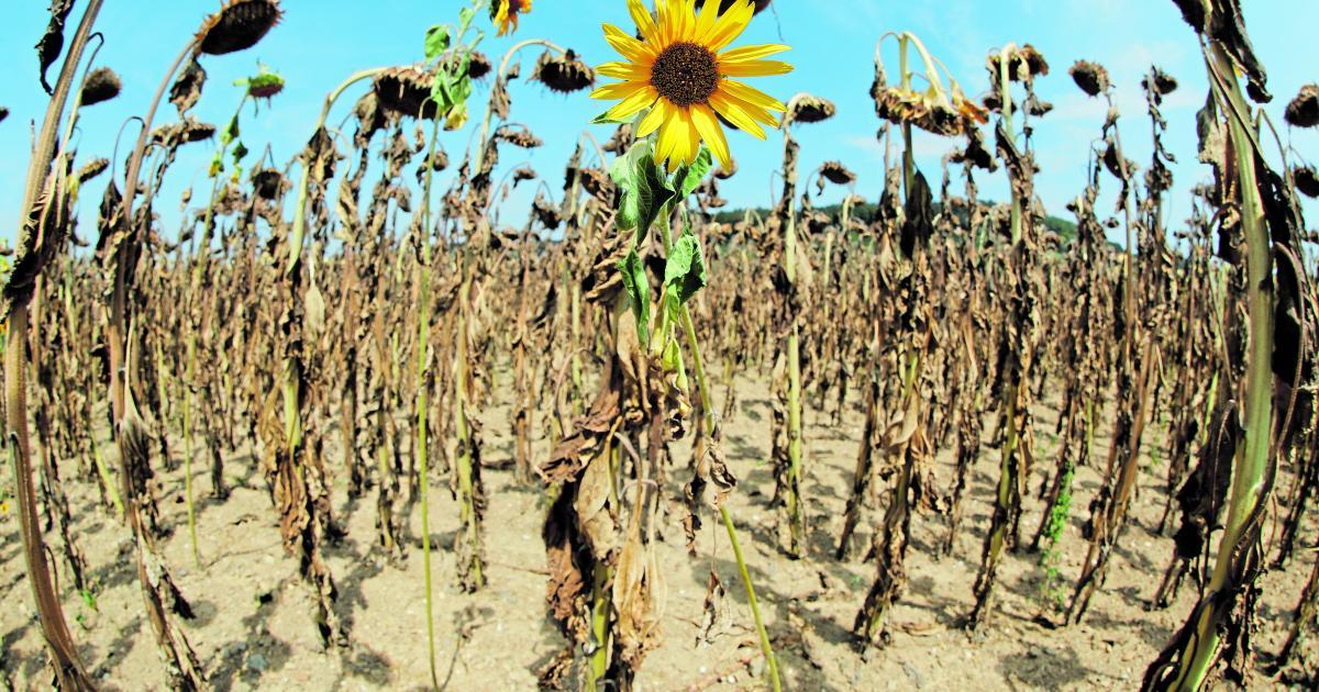 Extreme Dürren und Regenzeiten werden häufiger passieren