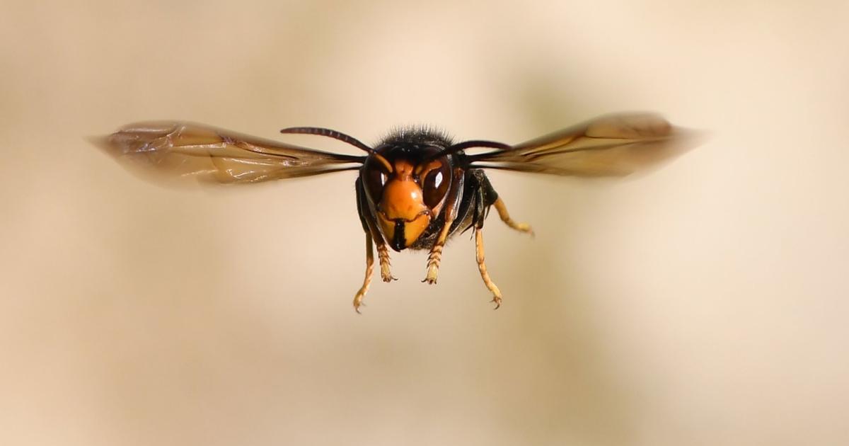 Naturschutzbund: Handystrahlen belasten Insekten