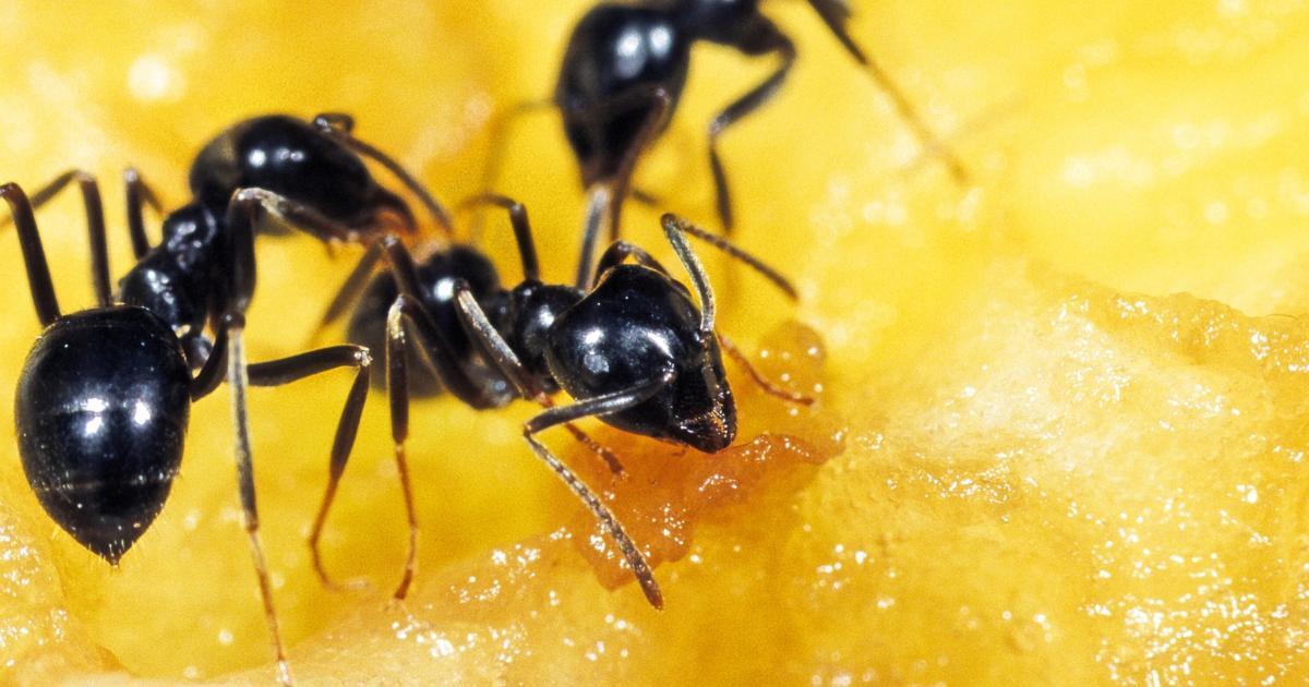 Ameisen sind die perfekten Astronauten